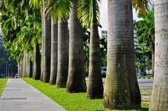 Reihe der Palme lizenzfreie stockbilder