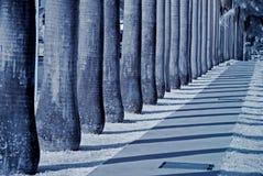 Reihe der Palmen im Park lizenzfreie stockfotografie