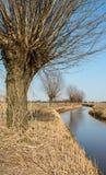 Reihe der Pollardweiden auf der Ufergegend Stockfotografie