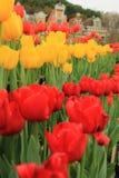 Reihe der roten und gelben Tulpenblume Lizenzfreie Stockfotografie