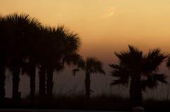 Reihe der silhouettierten Palmen Stockbilder