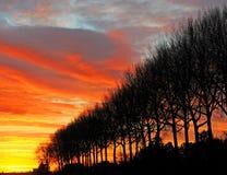 Reihe der Winterbaumschattenbilder gegen Abendhimmel Stockbild