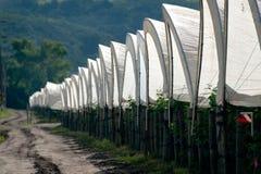 Reihe der Zelte Lizenzfreies Stockbild
