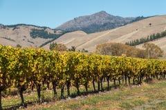 Reihe des Weinstocks im Weinberg mit Bergen Lizenzfreie Stockbilder