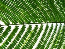 Reihe eines grünen Blattes Lizenzfreie Stockbilder