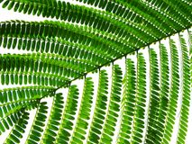 Reihe eines grünen Blattes Stockfoto