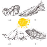 Reihe - Frucht, Gemüse und Gewürze Reihe - Frucht, Gemüse und Gewürze Von Hand gezeichnete Illustration in Weinlese styl Stockfotografie