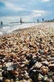 Reihe Shells auf dem Strand durch das Meer Lizenzfreie Stockfotografie