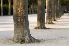 Reihe von Baumstämmen entlang der Straße Grünbaumstammreihe stockbild