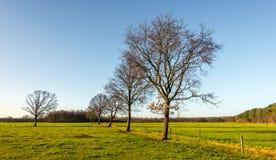 Reihe von blattlosen Bäumen an einem sonnigen Tag im Winter Stockfotografie