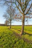 Reihe von blattlosen Bäumen an einem sonnigen Tag im Winter Lizenzfreie Stockbilder