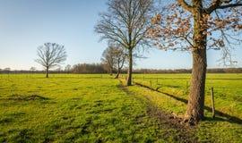 Reihe von blattlosen Bäumen an einem sonnigen Tag im Winter Stockbilder