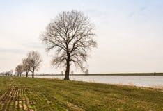 Reihe von bloßen Bäumen an einem Flussufer Lizenzfreie Stockfotos