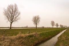 Reihe von bloßen Bäumen an einem Flussufer Stockbilder