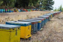 Reihe von bunten Bienen-Bienenstöcken mit Bäumen im Hintergrund Bienen-Bienenstöcke nahe bei einem Kiefern-Wald im Sommer Honey B Lizenzfreie Stockbilder