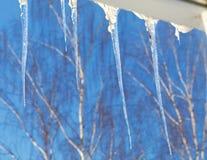 Reihe von den Eiszapfen, die von der Dachkante hängen Unscharfe Bäume in Stockbild
