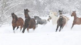 Reihe von den Pferden, die in Winter laufen Lizenzfreies Stockbild