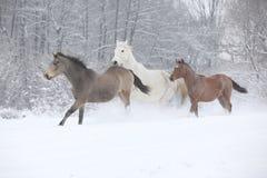 Reihe von den Pferden, die in Winter laufen stockbild