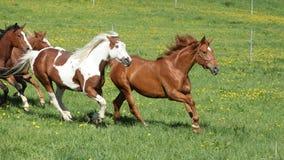 Reihe von den schönen Pferden, die auf Weide laufen Stockfotos
