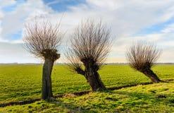 Reihe von drei Weidenbäumen nahe bei einem kleinen Abzugsgraben Lizenzfreies Stockbild