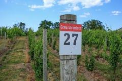 Reihe von Gewurztraminer-Trauben in einer Weinkellerei Lizenzfreies Stockfoto