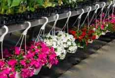 Reihe von hängenden Körben von Blumen Lizenzfreie Stockfotos