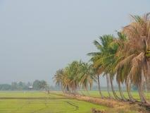 Reihe von Kokosnussbäumen auf dem Weg auf dem Reisgebiet an der thailändischen Landschaft, heller Nebel des Morgens mit dem Konze Stockfotos