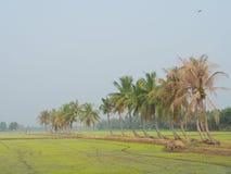 Reihe von Kokosnussbäumen auf dem Weg auf dem Reisgebiet an der thailändischen Landschaft, heller Nebel des Morgens mit dem Konze Lizenzfreie Stockfotografie
