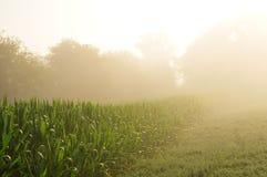 Reihe von Mais im Nebel Lizenzfreie Stockfotografie