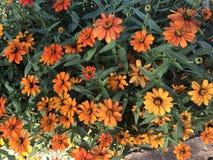 Reihe von orange Blumen Stockbilder