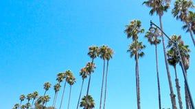 Reihe von Palmen auf dem Strand, der oben blauen Himmel untersucht Lizenzfreies Stockbild