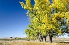 Reihe von Pappel-Bäumen mit Fallfarben und See Diefenbaker stockfoto