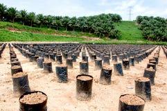 Reihe von Polytaschen in Palmöl nusey Lizenzfreies Stockfoto