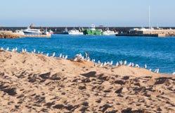 Reihe von Seemöwen auf dem Strand in Costa Brava Stockbilder