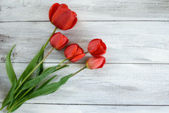 Reihe von Tulpen Lizenzfreies Stockbild
