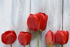 Reihe von Tulpen Lizenzfreie Stockbilder