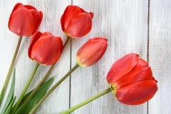 Reihe von Tulpen Stockfoto
