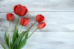 Reihe von Tulpen lizenzfreie stockfotos