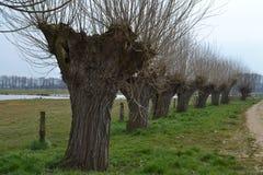 Reihe von Weiden in Fluss Oude IJssel Lizenzfreie Stockfotos