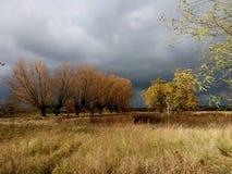Reihe von Weiden kurz vor Sturm stockfotos