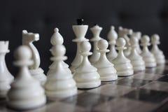 Reihe weißes Schach stellt konzentriert und unfocused auf hölzernes Schachbrett als Strategiespielkonzept dar Lizenzfreie Stockfotos