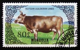 Reihen Bilder von ` züchten Kühe `, circa 1985 Lizenzfreie Stockfotografie