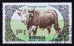 Reihen Bilder von ` züchten Kühe `, circa 1985 Stockbild
