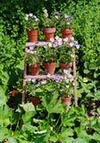 Reihen der Blume gefüllten Potenziometer Stockfotos