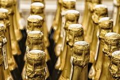 Reihen der Champagnerflaschen Lizenzfreie Stockbilder