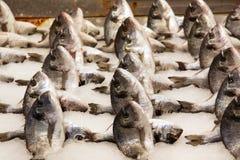 Reihen der frischen Fische auf dem Fischmarkt stockfotos
