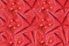 Reihen der roten Starfishes Stockbilder