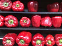 Reihen der Tomaten Stockbilder