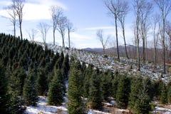Reihen der Weihnachtsbäume Lizenzfreies Stockbild