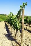 Reihen der Weinberge und der Hügel von Toskana in Italien Stockbild